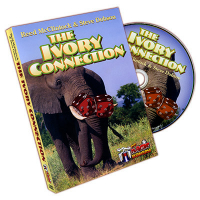 IVORY CONNECTION